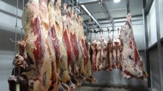 Illegal Backyard Slaughtering: Austrian Slaughter Decree Ahead Of Muslim Sacrifice Festival