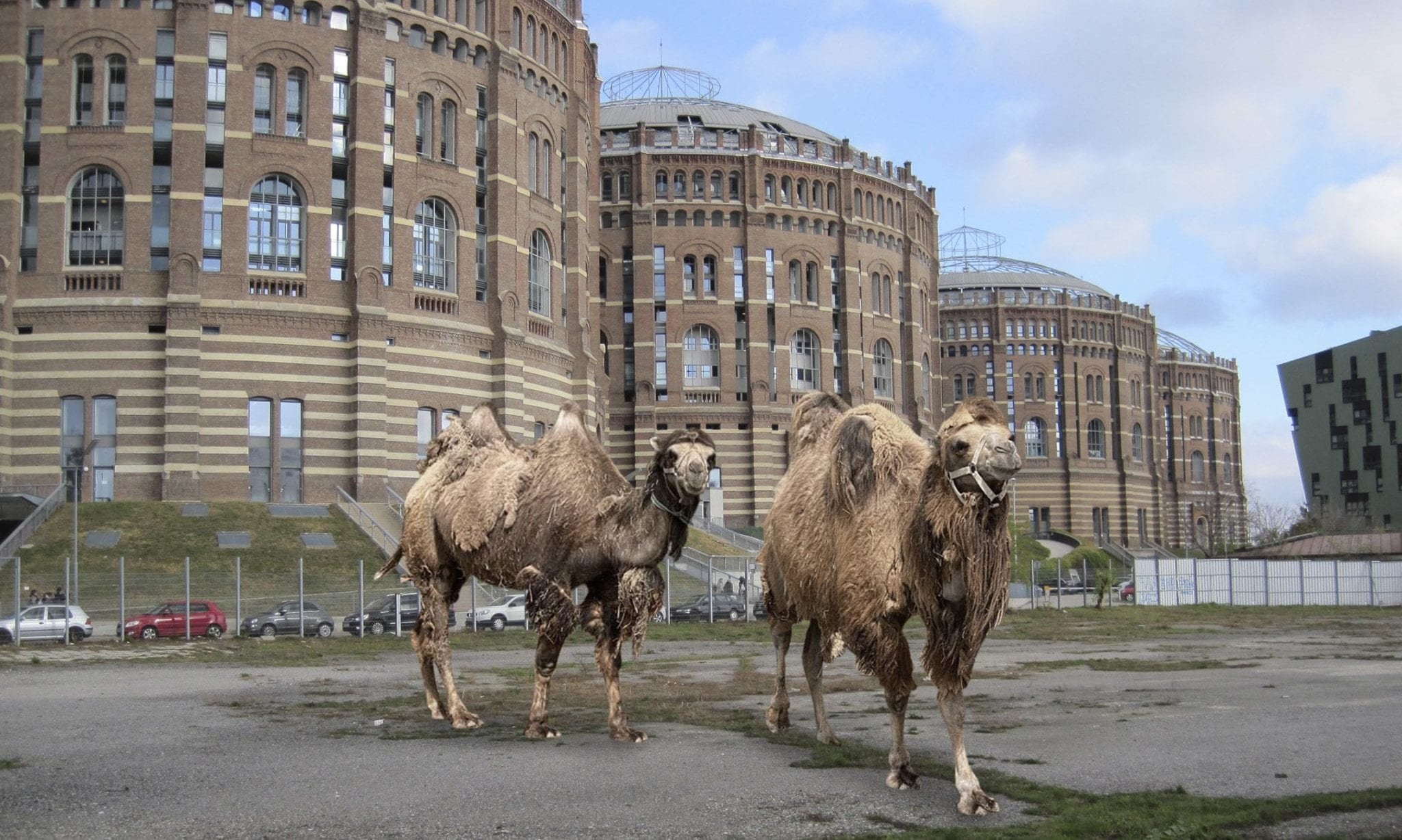Kamele vor dem Gasometer