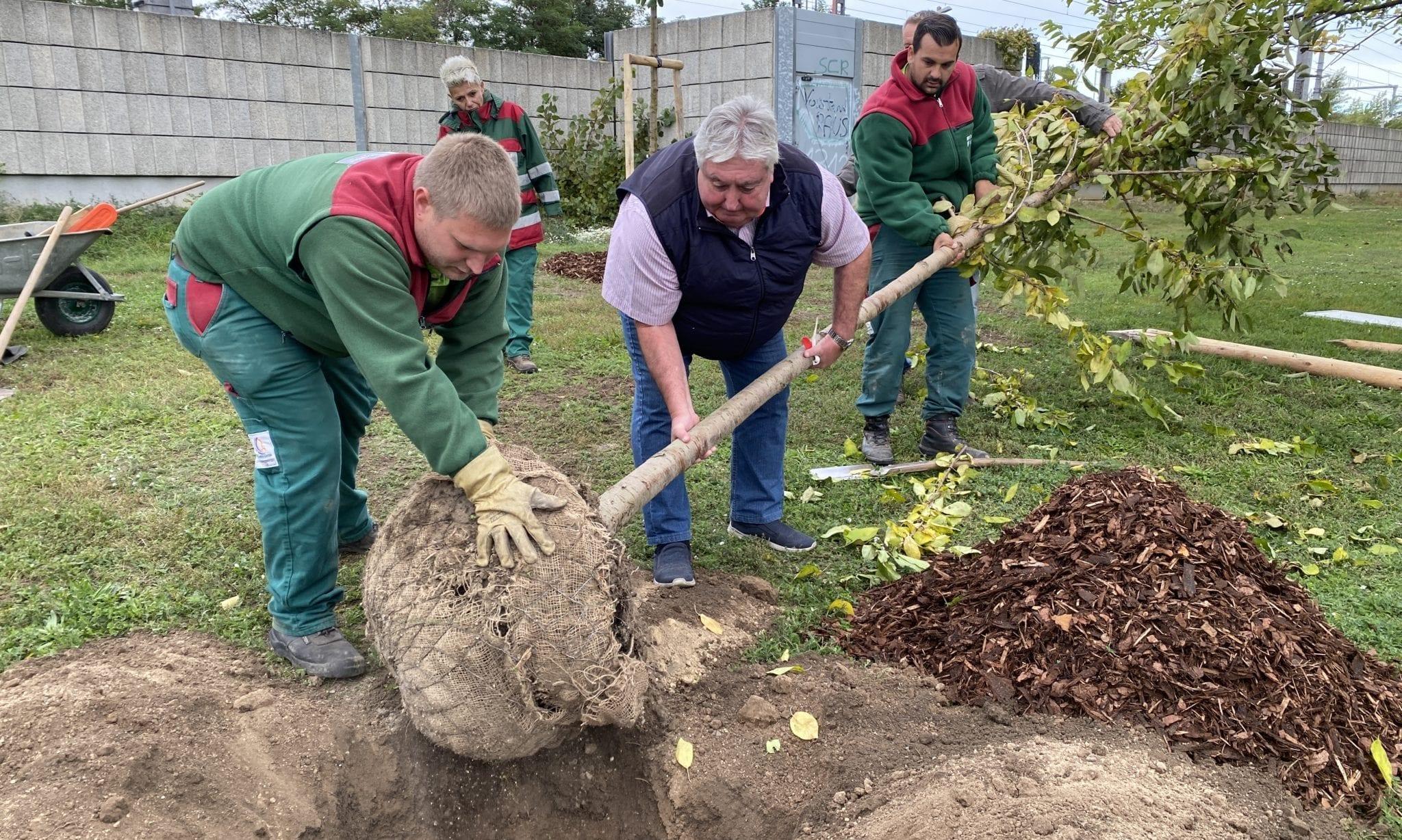 Paul Stadler Baumpflanzen