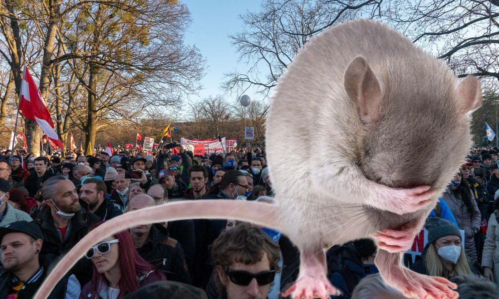 Ratte:Menschen